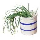 Crock, 4-1/2''H, 1 Quart Capacity, Ceramic, Decorated With 2 Blue Stripes, Dozen width=
